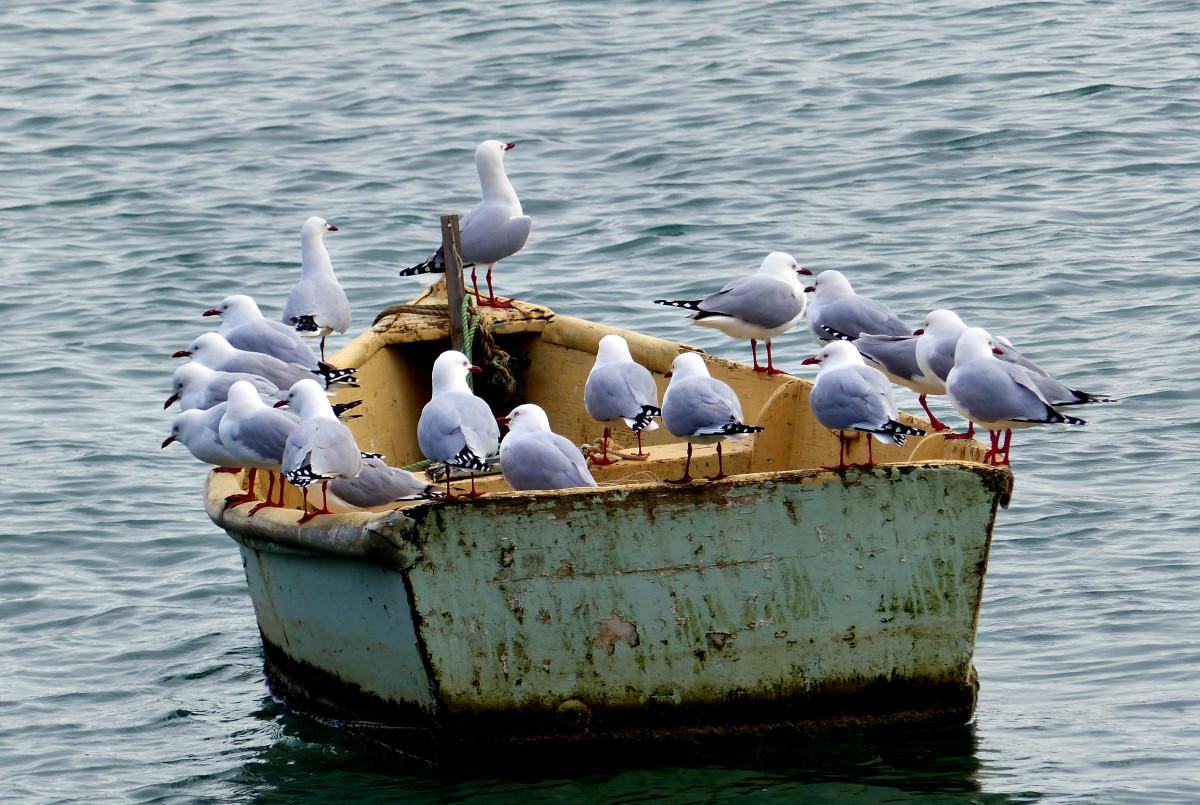 iga bateau bay job application
